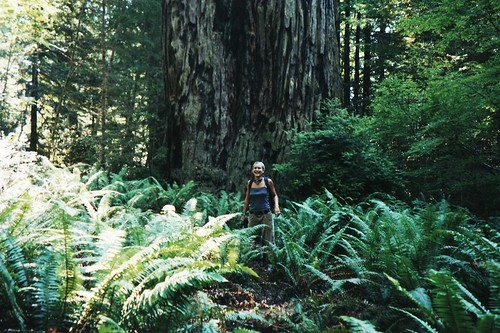 the ferns are as big as me! redwood national park.