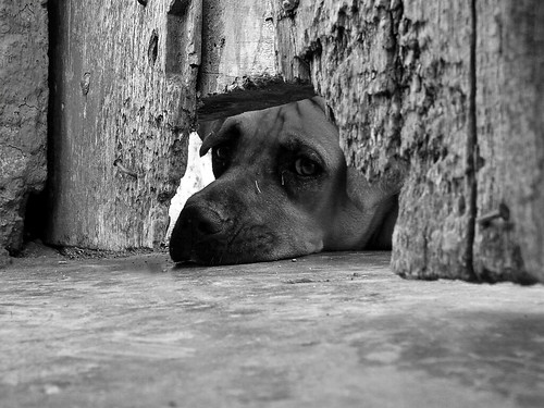 Pensamientos Caninos / Dog Thoughts