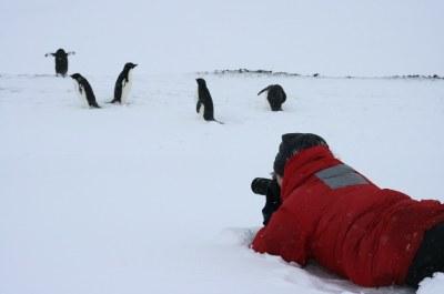 Antarctica: Penguin Hunting