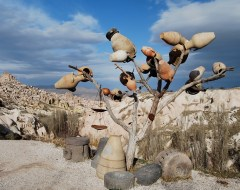 Tree - Cappadocia