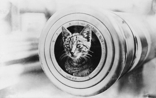 A cat on HMAS Encounter by Australian War Memorial collection