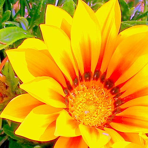 Wallpaper Hd Colors Bright Flower Edited Photo Photo Taken In Spanish