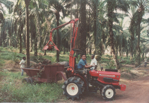Harvesting oil palm kernels
