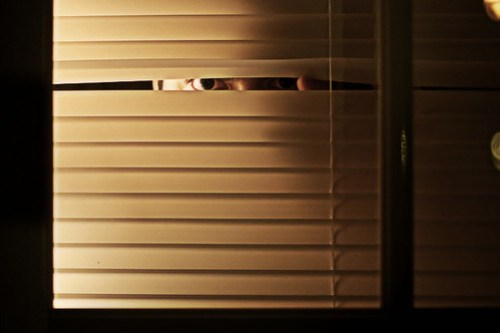 Self Peeking Through Blinds - January 13th, 2008 Employee Performance