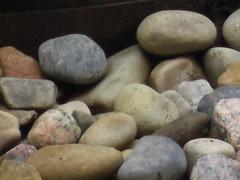 Rocks in the backyard up close