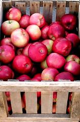 Apple Fest 2007