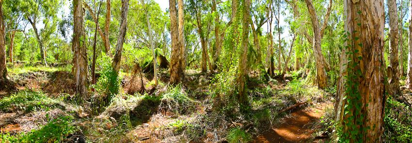 Millstream Nationalpark