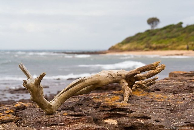 Driftwood on Rocks