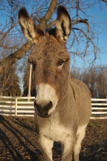 Winter Donkey in the Afternoon Sun  Flickr  Photo Sharing