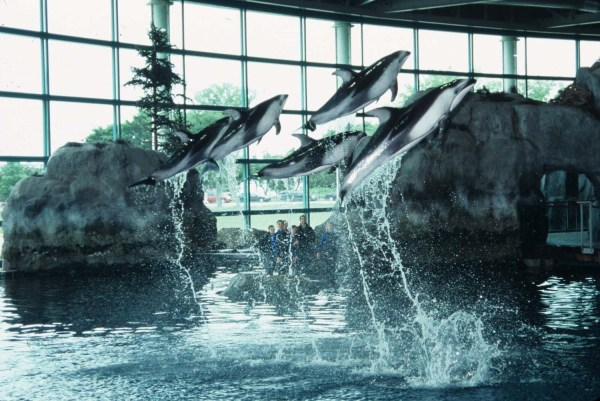 Chicago Aquariums And Zoos - City Card