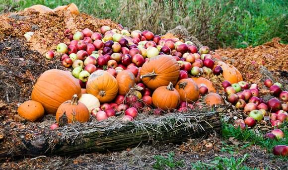Autumnal Waste
