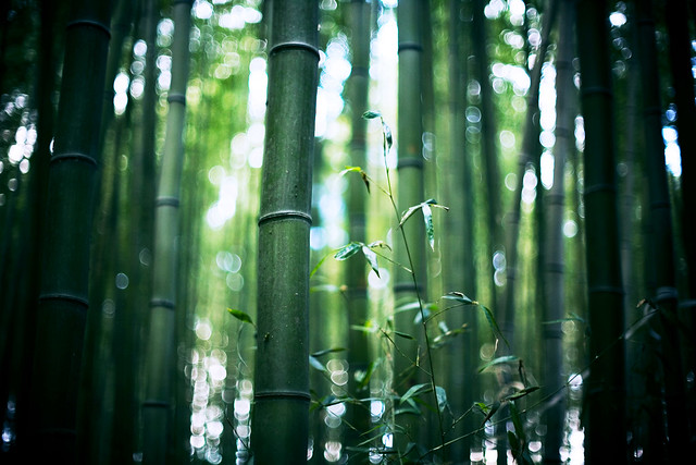 colors of bamboo* 01