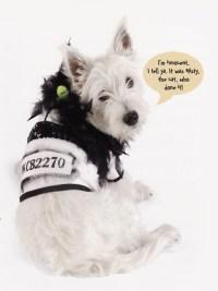 dog costume jail bird | Flickr - Photo Sharing!