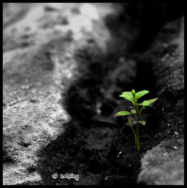 The Living Hope of Eternal Life