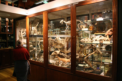 Glass cases (Grant Museum) by IanVisits, on Flickr