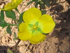 Flower por Trekking_RS_BRAZIL