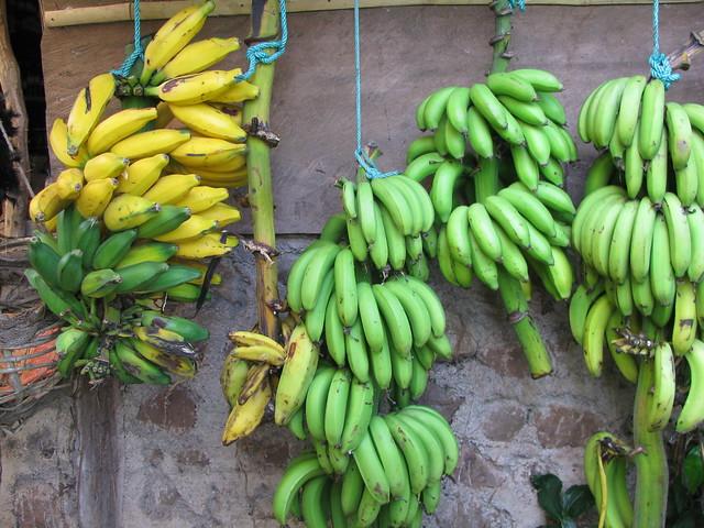 Ometepe Tropical Fruit - Sweet and Savoring
