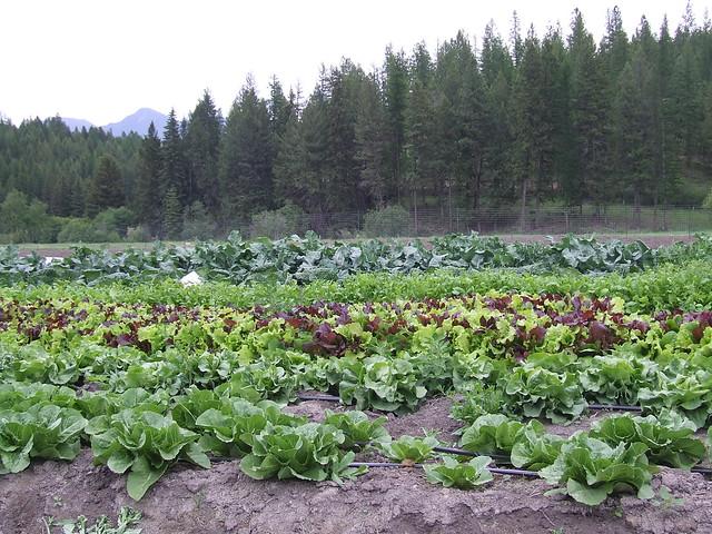 field trip :: csa farm