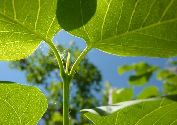 Plant Development Boundless Biology
