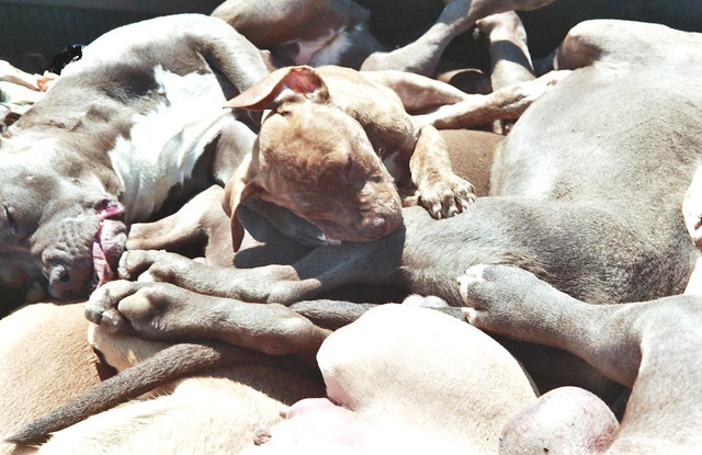 Graphic Dead Dogs Killed By The Hate And Discrimination