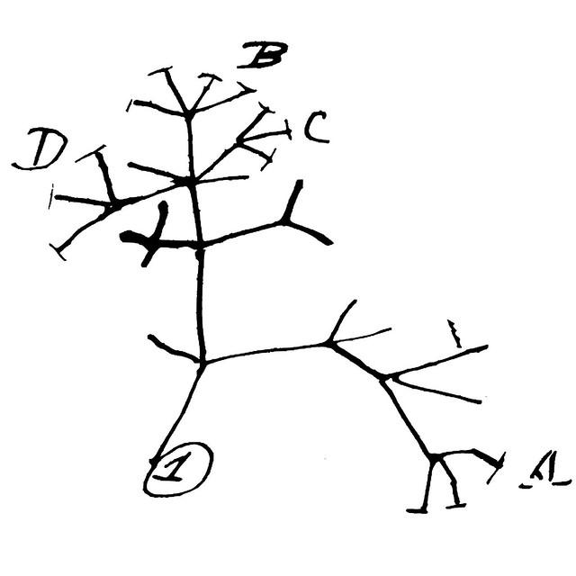 Darwin's Tree of Life | Flickr - Photo Sharing!