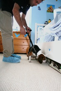 Bed Bug Detection Dogs   Flickr - Photo Sharing!