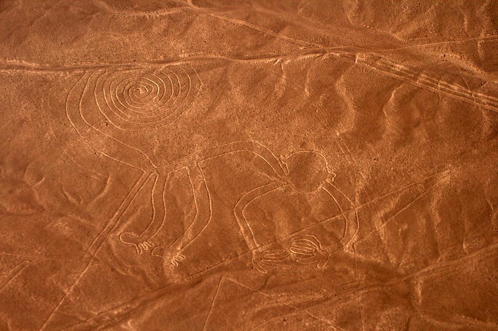 Nazca, singe