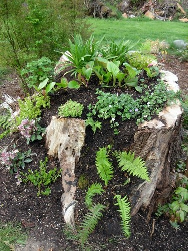 Tree stump planter when planted  Flickr  Photo Sharing