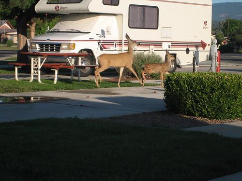 RV park wildlife 6_August_2009