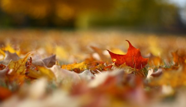Fall Foliage on the Ground - by Billy Wilson