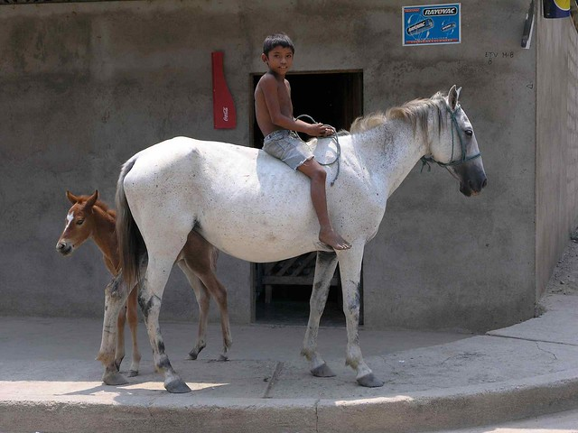 boyhorse2