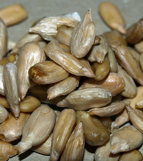 Sunflower Seeds Without Shells Flickr Photo Sharing!