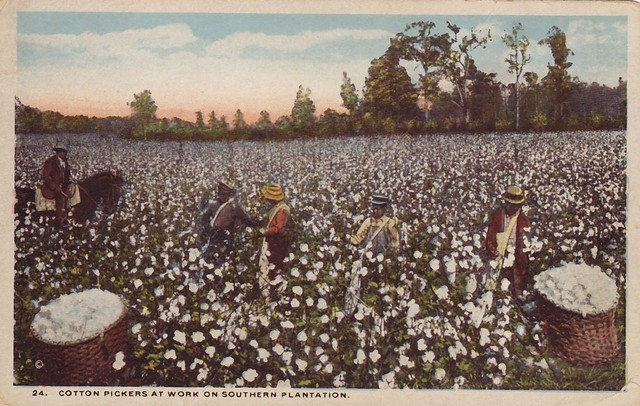 Cotton Pickers at Work on Southern Plantation  Flickr