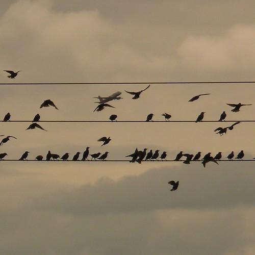 Boeing + Birds
