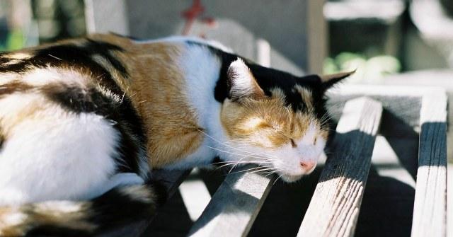 三毛猫 2009/11/15 FM2_040_0009