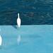 water world San Diego