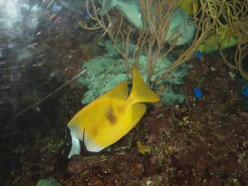 200907240721_aquarium