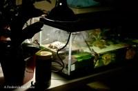 turtle tank lighting - Do You Need A Uvb Light For Turtles ...