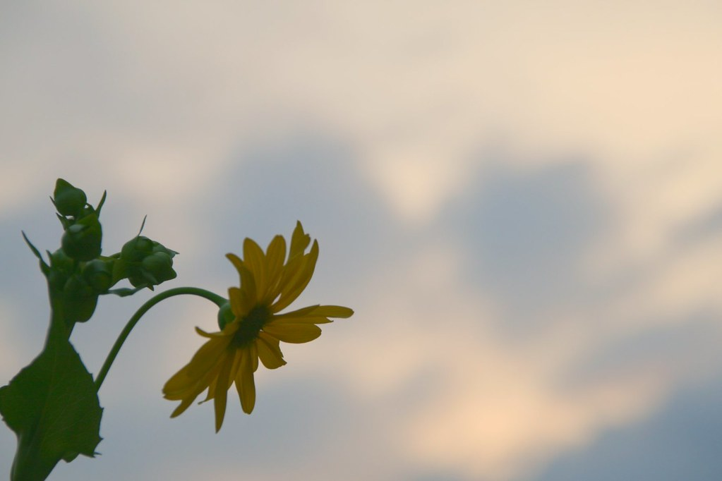 Sun(flower) Set