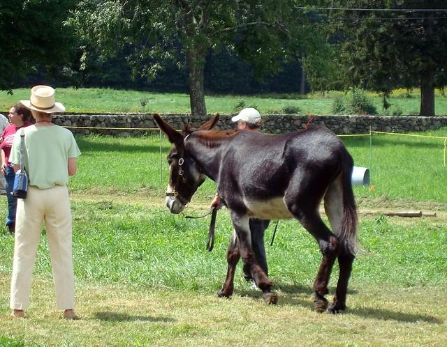 Mammoth Donkey  Flickr  Photo Sharing
