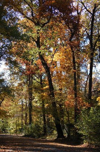 Old Forest, Memphis, Tenn.