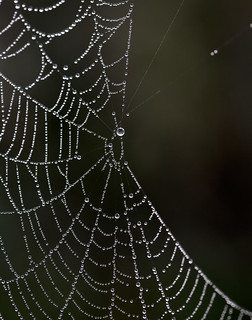 Morning dew on a spiderweb