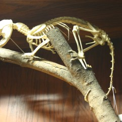Opossum Skeleton Diagram Basic Turn Signal Wiring Search Results For Labeled  Calendar 2015