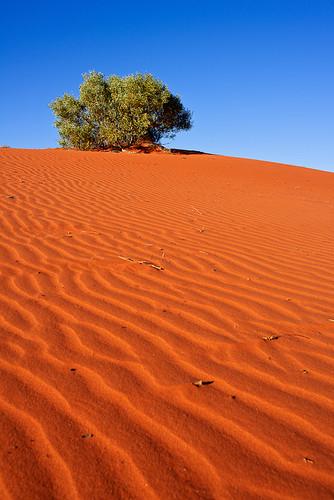 Die schöne rote Sanddüne in Alice Springs