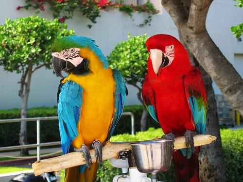 Parrot by JTrend (http://www.flickr.com/photos/jtrend/)