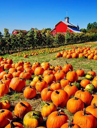 where is my pumpkin? =}