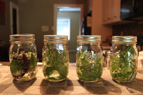 20110618. infused vodkas with herbs from the garden.