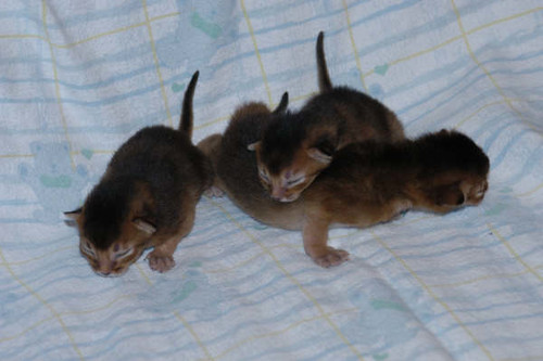 newborns3