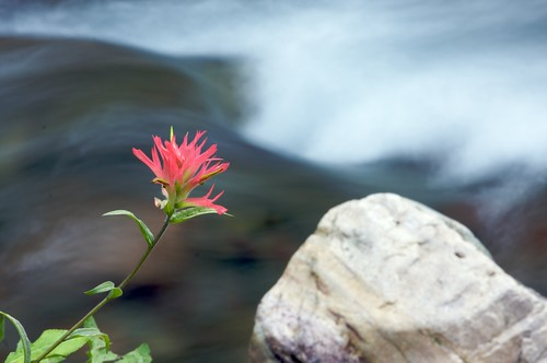 Paintbrush in front of Waterfall at Glacier National Park