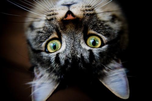 candid cat